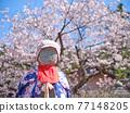 親愛的櫻花和地藏 77148205