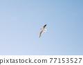 A flying bird in blue clear sky. 77153527