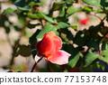 植物 植物學 植物的 77153748