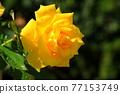 植物 植物學 植物的 77153749