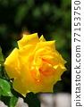 植物 植物學 植物的 77153750