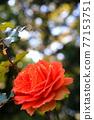 植物 植物學 植物的 77153751