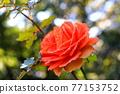 植物 植物學 植物的 77153752