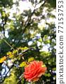 植物 植物學 植物的 77153753