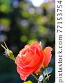 植物 植物學 植物的 77153754