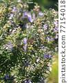花朵 花 花卉 77154018