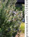 花朵 花 花卉 77154019
