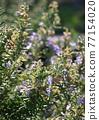 花朵 花 花卉 77154020