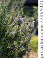 花朵 花 花卉 77154021