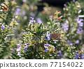 花朵 花 花卉 77154022