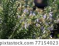 花朵 花 花卉 77154023