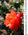 植物 植物學 植物的 77154043