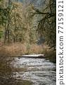 forest, woodland, wood 77159121