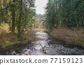 forest, woodland, wood 77159123