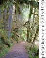 forest, woodland, wood 77159126