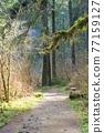 forest, woodland, wood 77159127