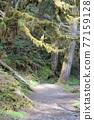 forest, woodland, wood 77159128