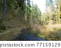 forest, woodland, wood 77159129