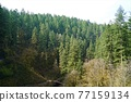 mountain, forest, woodland 77159134