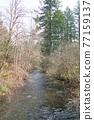 forest, woodland, wood 77159137