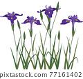 vector, vectors, iris 77161402