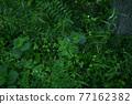 verdure, bloom, blossom 77162382