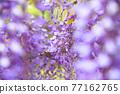 紫藤花 77162765