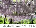Kazahayano村富士節 77163937