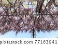 Kazahayano村富士節 77163941