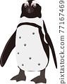 海角企鵝 77167469