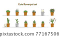 仙人掌 室內盆栽 觀葉植物 77167506