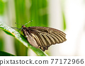 Close up image of butterfly sitting on green leaf 77172966