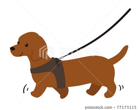 dog, dogs, toy dog 77173115