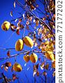 植物 植物學 植物的 77177202
