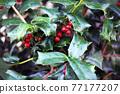 植物 植物學 植物的 77177207