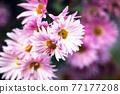 袋鼠粉色花 77177208