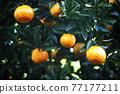 植物 植物學 植物的 77177211