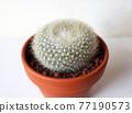 仙人掌盆的植物 77190573
