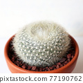 仙人掌盆的植物 77190762