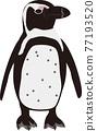 景觀海角企鵝 77193520