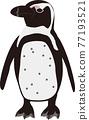 景觀海角企鵝 77193521