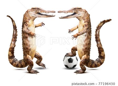 Crocodile soccer player 77196430