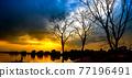 Dead tree on sunset 77196491