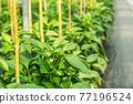 Plant nursery 77196524