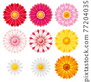 花朵 花 花卉 77204035