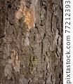 Tree bark texture 77212393
