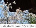 scenery, scenic, sacred tree 77226043