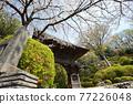 scenery, scenic, sacred tree 77226048