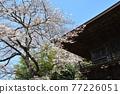 scenery, scenic, sacred tree 77226051
