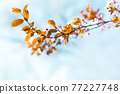 Beautiful spring nature web banner with brown tree leaves on blurred background 77227748